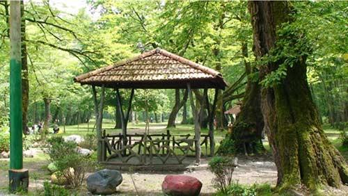 پارک-جنگلی-کشپل5