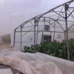 گلخانه های مازندران